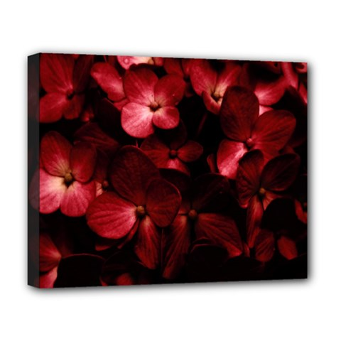 Red Flowers Bouquet In Black Background Photography Deluxe Canvas 20  X 16  (framed)