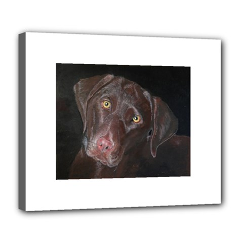 Inquisitive Chocolate Lab Deluxe Canvas 24  X 20  (framed)