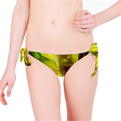 Abstract Yellow Daffodils Bikini Bottom