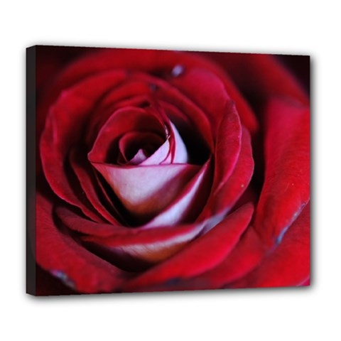Red Rose Center Deluxe Canvas 24  X 20  (framed)