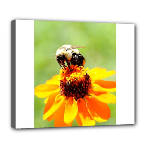 Bee On A Flower Deluxe Canvas 24  X 20  (framed)