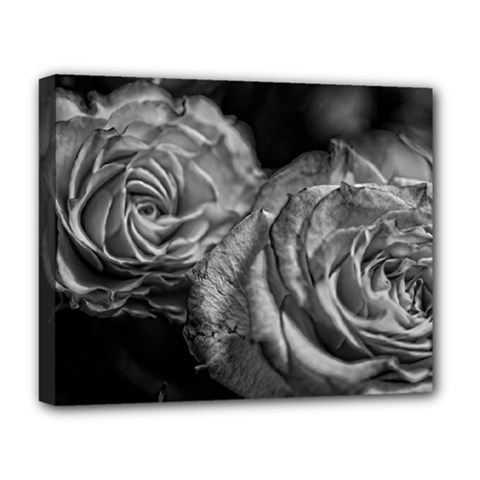 Black And White Tea Roses Deluxe Canvas 20  X 16  (framed)