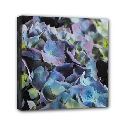 Blue And Purple Hydrangea Group Mini Canvas 6  X 6  (framed)