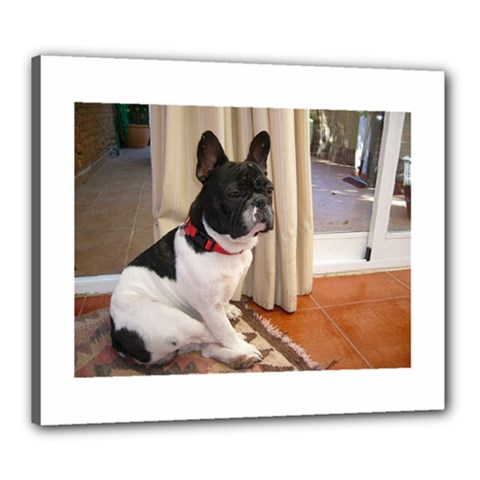 Sitting 3 French Bulldog Canvas 24  x 20  (Framed)