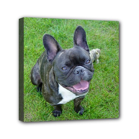 Sitting 2 French Bulldog Mini Canvas 6  x 6  (Framed)