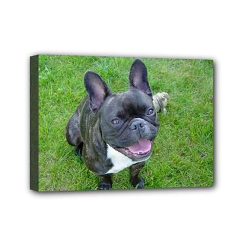 Sitting 2 French Bulldog Mini Canvas 7  x 5  (Framed)