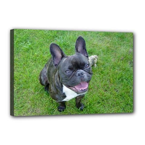 Sitting 2 French Bulldog Canvas 18  x 12  (Framed)