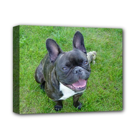 Sitting 2 French Bulldog Deluxe Canvas 14  x 11  (Framed)