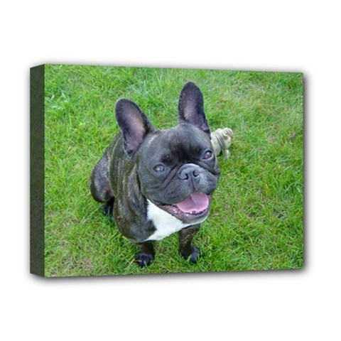 Sitting 2 French Bulldog Deluxe Canvas 16  x 12  (Framed)