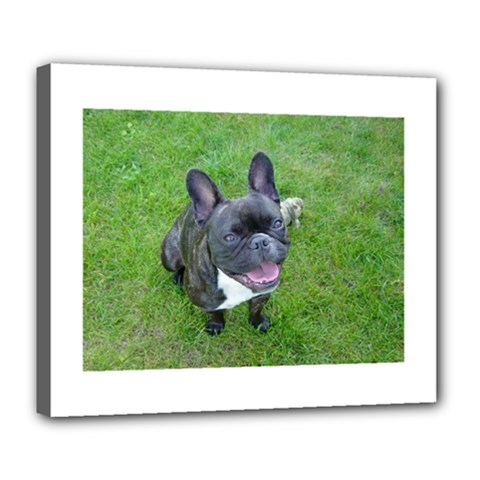 Sitting 2 French Bulldog Deluxe Canvas 24  x 20  (Framed)