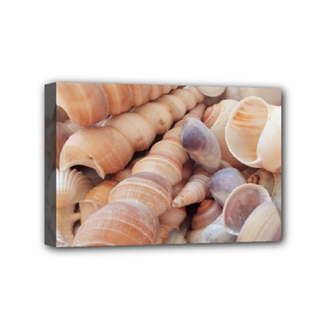 Seashells 3000 4000 Mini Canvas 6  x 4  (Framed)