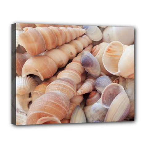 Sea Shells Canvas 14  X 11  (framed)