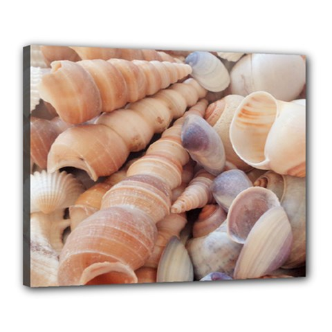 Sea Shells Canvas 20  x 16  (Framed)