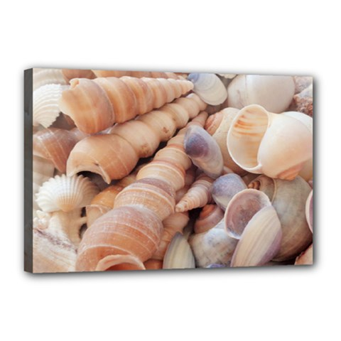 Sea Shells Canvas 18  X 12  (framed)