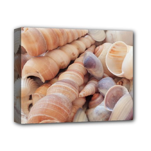 Sea Shells Deluxe Canvas 14  X 11  (framed)