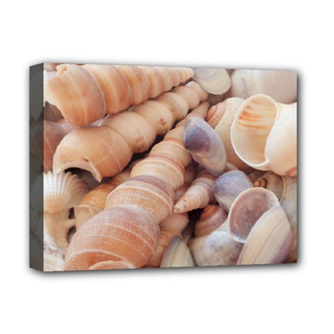 Sea Shells Deluxe Canvas 16  x 12  (Framed)