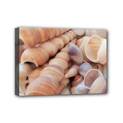 Sea Shells Mini Canvas 7  x 5  (Framed)
