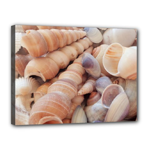 Sea Shells Canvas 16  X 12  (framed)