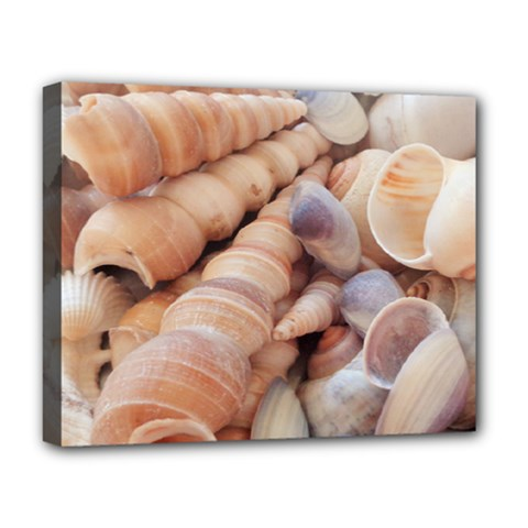 Sea Shells Deluxe Canvas 20  X 16  (framed)