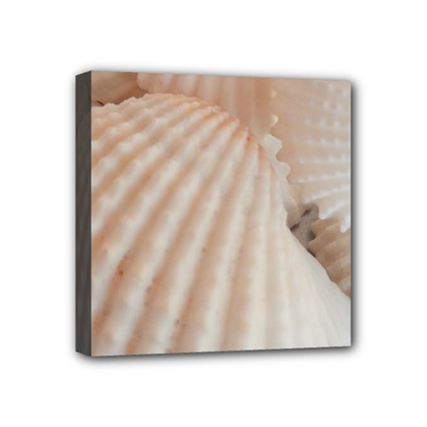 Sunny White Seashells Mini Canvas 4  x 4  (Framed)