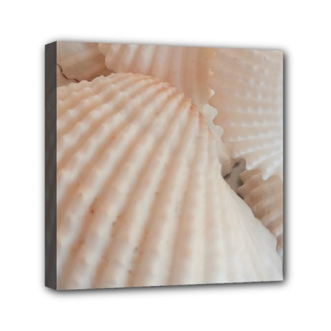 Sunny White Seashells Mini Canvas 6  x 6  (Framed)