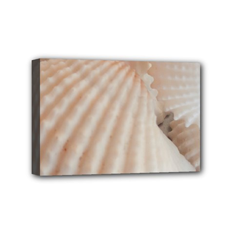 Sunny White Seashells Mini Canvas 6  x 4  (Framed)