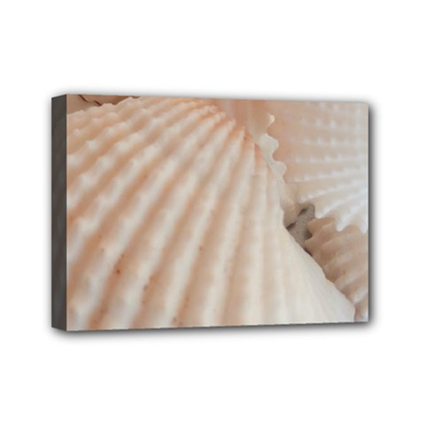 Sunny White Seashells Mini Canvas 7  x 5  (Framed)