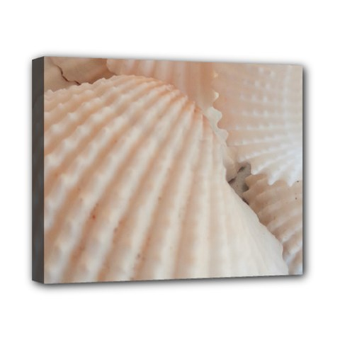 Sunny White Seashells Canvas 10  x 8  (Framed)