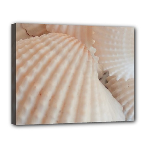 Sunny White Seashells Canvas 14  X 11  (framed)