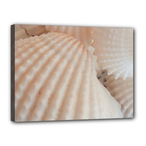 Sunny White Seashells Canvas 16  X 12  (framed)
