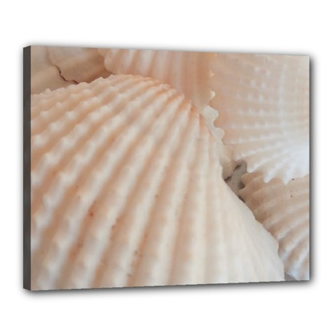 Sunny White Seashells Canvas 20  x 16  (Framed)