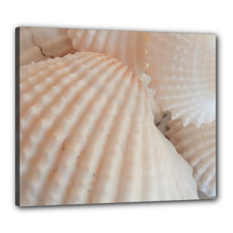 Sunny White Seashells Canvas 24  x 20  (Framed)