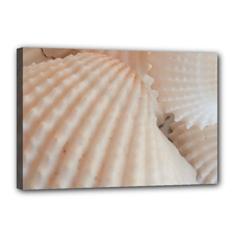 Sunny White Seashells Canvas 18  x 12  (Framed)