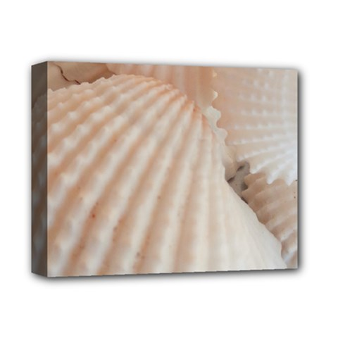 Sunny White Seashells Deluxe Canvas 14  x 11  (Framed)