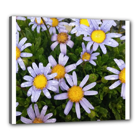 Yellow White Daisy Flowers Canvas 24  X 20  (framed)