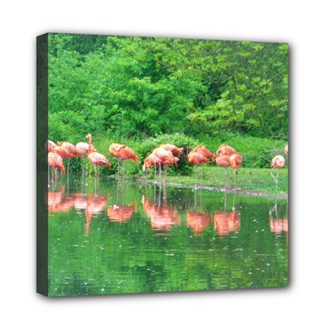 Flamingo Birds at lake Mini Canvas 8  x 8  (Framed)