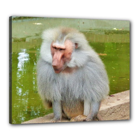 Grey Monkey Macaque Canvas 24  X 20  (framed)