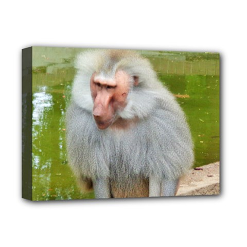 Grey Monkey Macaque Deluxe Canvas 16  X 12  (framed)