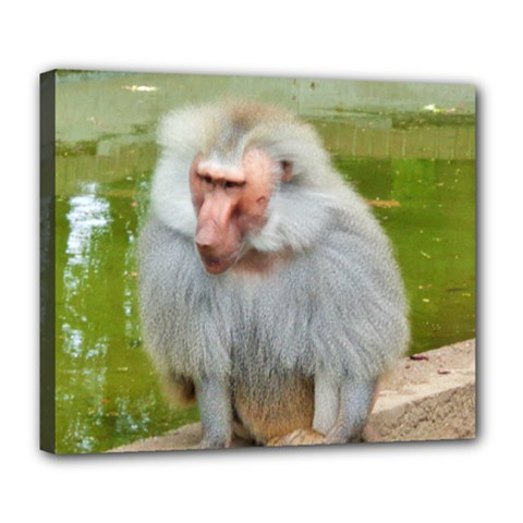 Grey Monkey Macaque Deluxe Canvas 24  X 20  (framed)