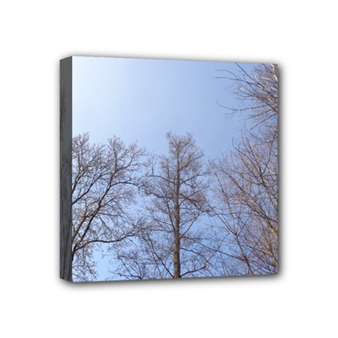 Large Trees In Sky Mini Canvas 4  X 4  (framed)