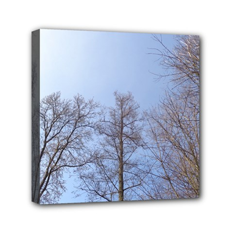 Large Trees In Sky Mini Canvas 6  X 6  (framed)
