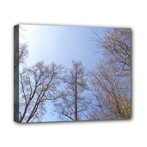 Large Trees In Sky Canvas 10  X 8  (framed)