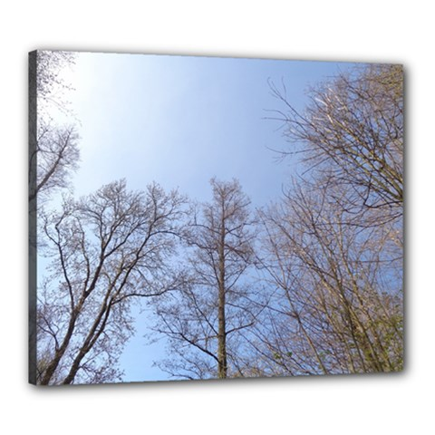 Large Trees In Sky Canvas 24  X 20  (framed)