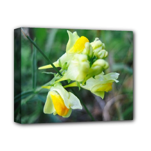 Linaria Flower Deluxe Canvas 14  X 11  (framed)