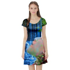 Fountain Of Youth Short Sleeve Skater Dress