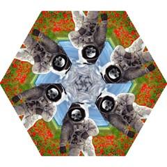 Exodus Mini Folding Umbrellas