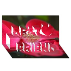 Bright Red Rose Best Friends 3D Greeting Card (8x4)