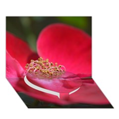 Bright Red Rose Heart Bottom 3D Greeting Card (7x5)