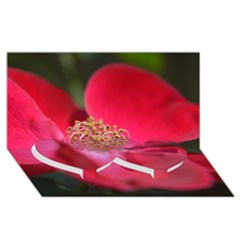 Bright Red Rose Twin Heart Bottom 3d Greeting Card (8x4)
