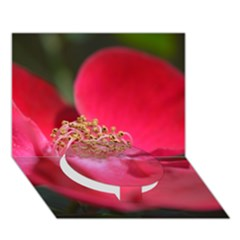 Bright Red Rose Circle Bottom 3d Greeting Card (7x5)